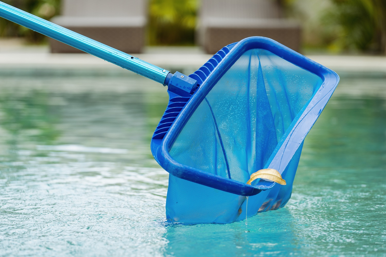 Cleaning swimming pool of fallen leaves with special skimmer mesh equipment